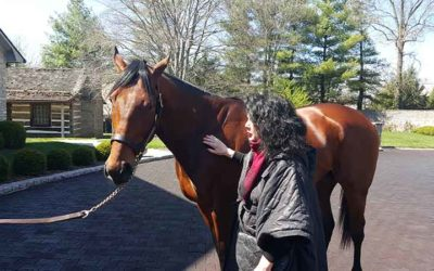 208 new foals with American Pharoah as their daddy