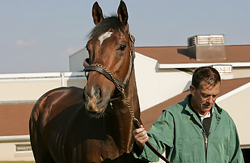 Remembering Barbaro and benefiting Laminitis Research