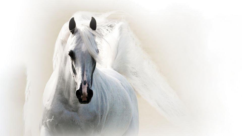 Scottsdale Arabian Horse Show  February 13 – 23, 2020