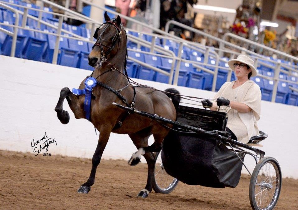 Carousel Charity Horse Show   March 12-15, 2020